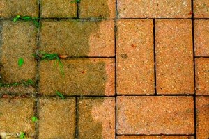 Patio Paver Weed